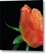 Orange Flame Rose Metal Print by Tracy Hall