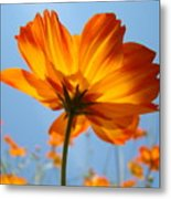 Orange Floral Summer Flower Art Print Daisy Type Blue Sky Baslee Troutman Metal Print