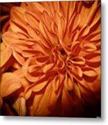 Orange Flower Enhanced 2016 Metal Print