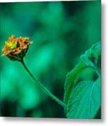 Orange Flower IIi Metal Print