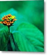 Orange Flower Iv Metal Print