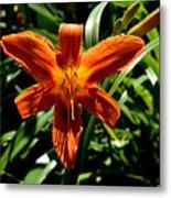Orange Flower Of Summer Metal Print