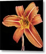 Orange,  Flower Metal Print