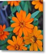 Orange Flowers Metal Print by Lori Kesten