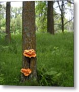 Orange Fungi On A Tree Metal Print