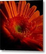 Orange Gerbera Metal Print