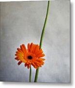 Orange Gernera Metal Print