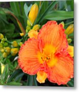 Orange Gladiola Flower And Buds Metal Print