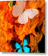 Orange Glads With Two Butterflies Metal Print