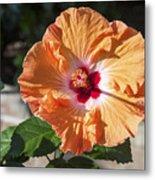 Orange Hibiscus Metal Print