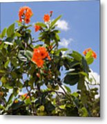 Orange Hibiscus With Fruit On The Indian River In Florida Metal Print