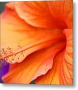 Orange Hybiscus Metal Print