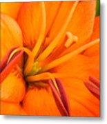 Orange II Metal Print