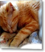 Orange Kitten Sleeping In Silk And Satin Metal Print