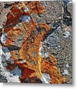 Orange Lichen Metal Print