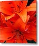 Orange Lily Closeup Digital Painting Metal Print