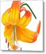 Orange Lily No 3 Metal Print