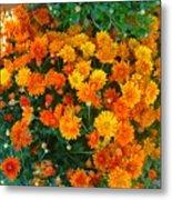 Orange Margarita Daisy Metal Print