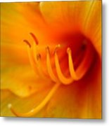 Orange Marmalade 2 Metal Print