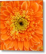 Orange Mum In Detail Metal Print