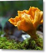 Orange Mushroom Flower On The Forest Floor Metal Print