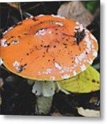 Orange Mushroom Metal Print