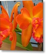 Orange Orchid Metal Print