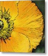 Orange Oriental Poppy Metal Print