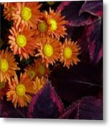 Orange Petals And Purple Leaves Metal Print