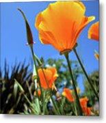 Orange Poppy Blue Sky Metal Print