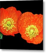 Orange Poppy Collage Cutout Metal Print