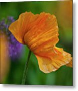 Orange Poppy Flower Metal Print