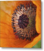 Orange Poppy With Texture Metal Print