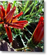 Orange Power Metal Print