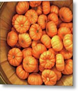 Orange Pumpkins Autumn Background. Metal Print