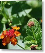 Orange  Red Flowers Metal Print