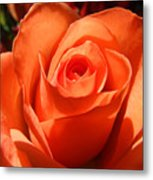 Orange Rose Photograph Metal Print