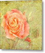 Orange Rose With Old Paint Texture Background Metal Print