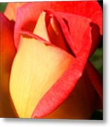 Orange Rosebud Metal Print
