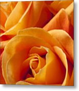 Orange Roses Metal Print by Garry Gay