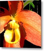 Orange Slipper Orchid Metal Print