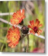 Orange Small Flowers With Buds Metal Print