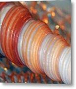 Orange Spiral Shell Metal Print