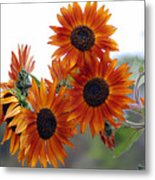 Orange Sunflower 1 Metal Print
