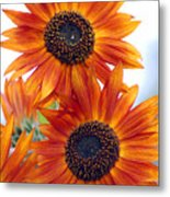 Orange Sunflower 2 Metal Print