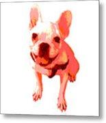 Orange Terrier Metal Print