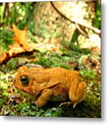 Orange Toad Metal Print