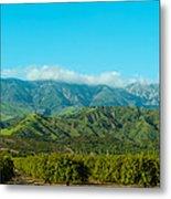 Orange Tree Grove, Santa Paula, Ventura Metal Print