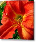 Orange Trumpeting Lily Metal Print