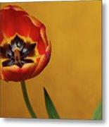 Orange Tulip 2 Metal Print